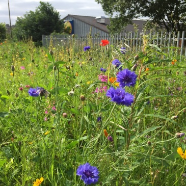 Flowers in Dalry community park